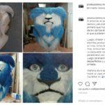 gato instagram animación